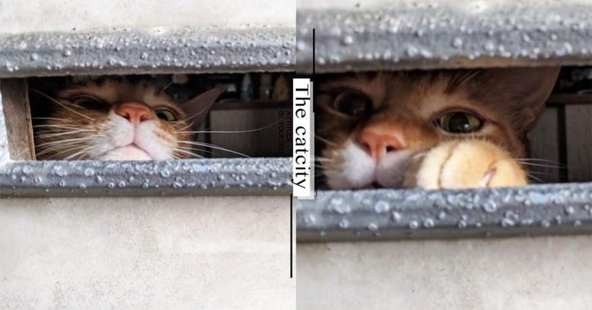 日本貓咪迎接奴才回家,信箱孔縫「萌掌攻擊」:「快給我摸摸!」