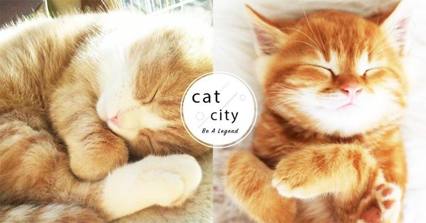 【貓咪冷知識】貓睡這麼久正常嗎?揭秘「貓長時間睡覺」的 3 個主要原因!