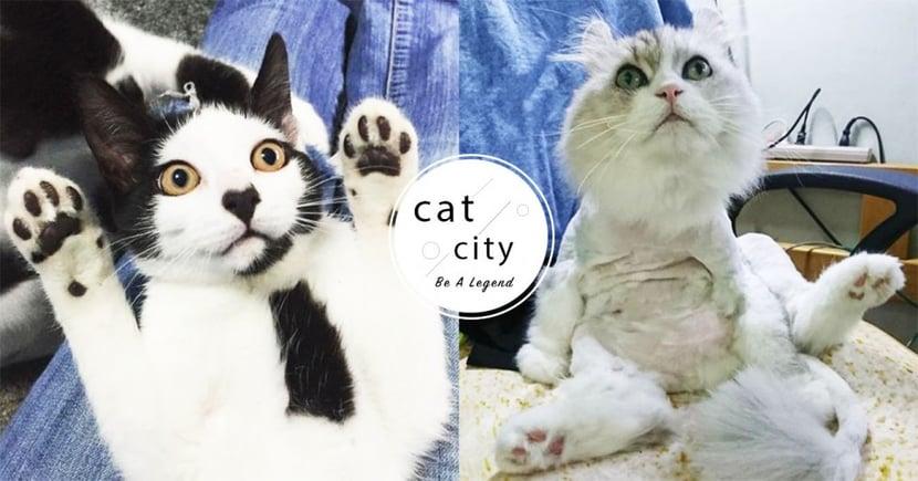 【夏天貓該不該剃毛】貓全身剃光有助消暑?關於剃毛你需要了解的 4 件事!