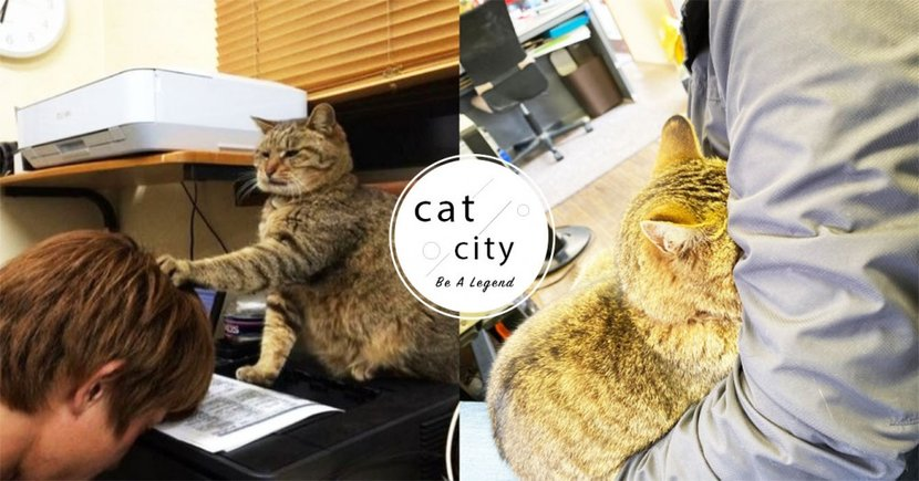 日本賽車場變成「貓咪樂園」,干擾工作還企圖控制職員:「快開罐罐!」