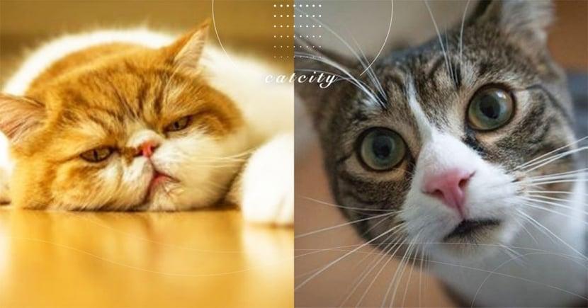 【貓咪嘔吐】吐出綠色東西?從貓「嘔吐物顏色」觀察健康問題!