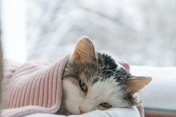 打噴嚏,貓咪感冒,流鼻涕