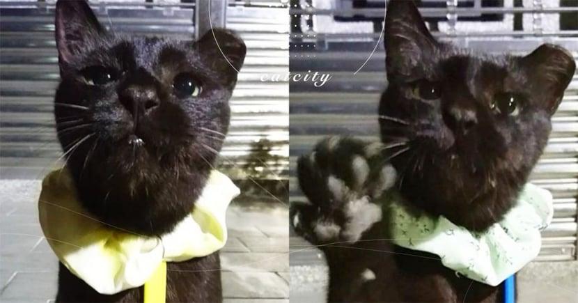 黑貓「大娘」萌眼戴領巾,開掌花討食萌翻:「五百拿來!」