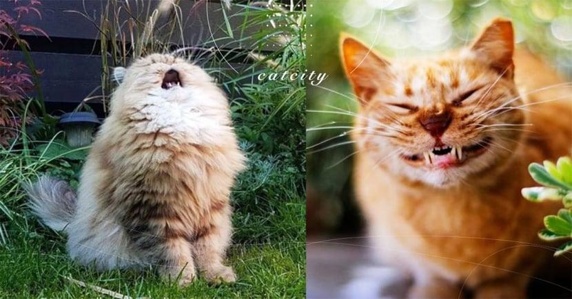 【貓咪感冒症狀】鼻頭乾燥發熱?小心這 8 種症狀是「貓咪感冒」了!