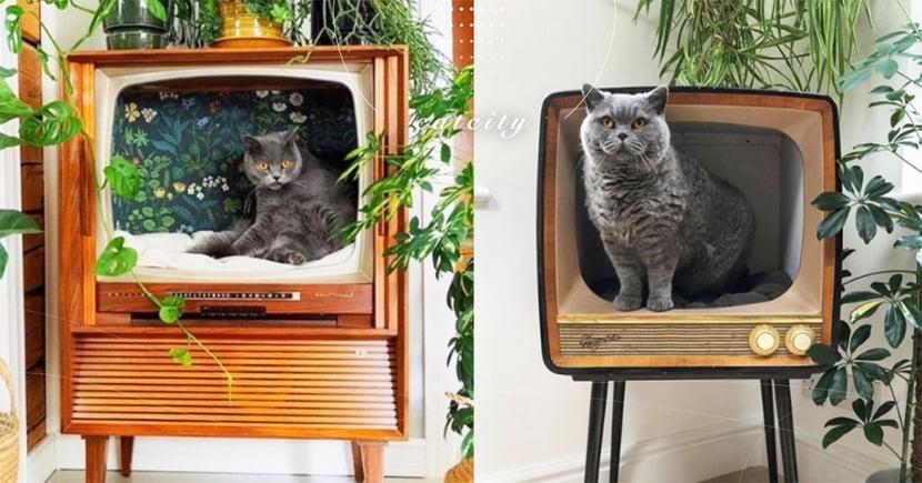 電視有貓?!國外復古電視大翻身,獨特貓窩設計超想買 網:想看一整天!