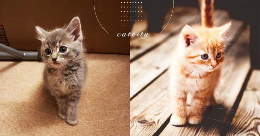 【愛滋貓照護】怎麼照顧愛滋貓?關於愛滋貓的 4 項準則!