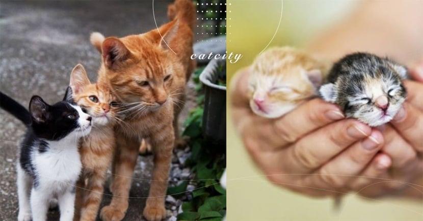 【貓咪何時結紮】發情可以結紮嗎?一文了解貓咪黃金絕育時間點!