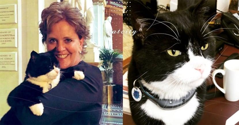 英國外交部「首席捕鼠貓」宣布辭職,退休返鄉享受幸福貓生