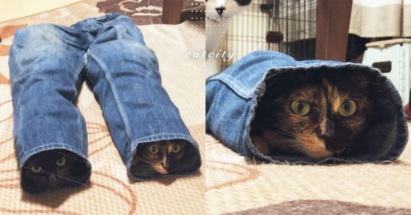 日本推主的褲管竟然「長貓」,兩隻貓咪匍匐躲貓貓 網笑瘋:天然貓隧道