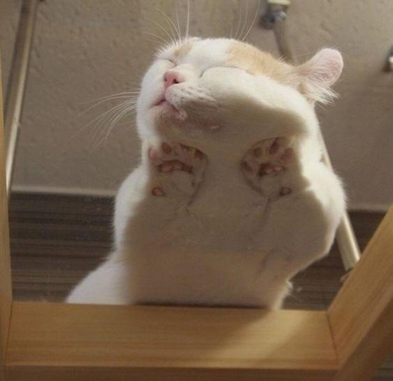 養貓困擾,貓咪惡趣味