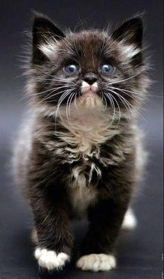 貓緣,吸貓體質