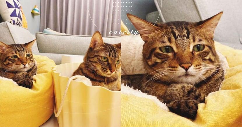 貓咪合照硬擺臭臉,虎斑貓「超憂鬱表情」引熱議 奴才:牠天生委屈臉