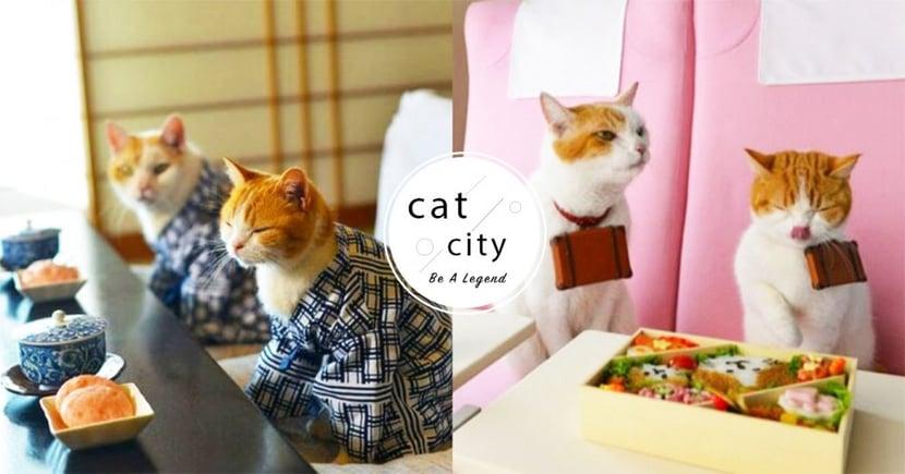 【貓咪飲食】貓過胖?吃過量?新手常見「五大錯誤」餵食方式,你中招了嗎