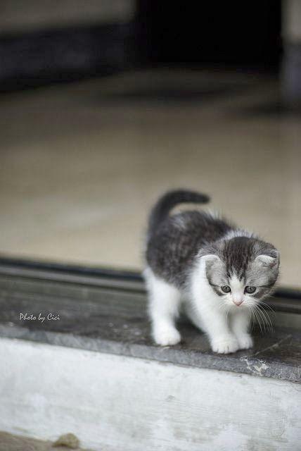 貓咪健檢,貓咪健檢須知