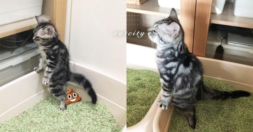超怕弄髒!潔癖小貓「站著嗯便」超逗趣姿勢引熱議 網:我家也會!