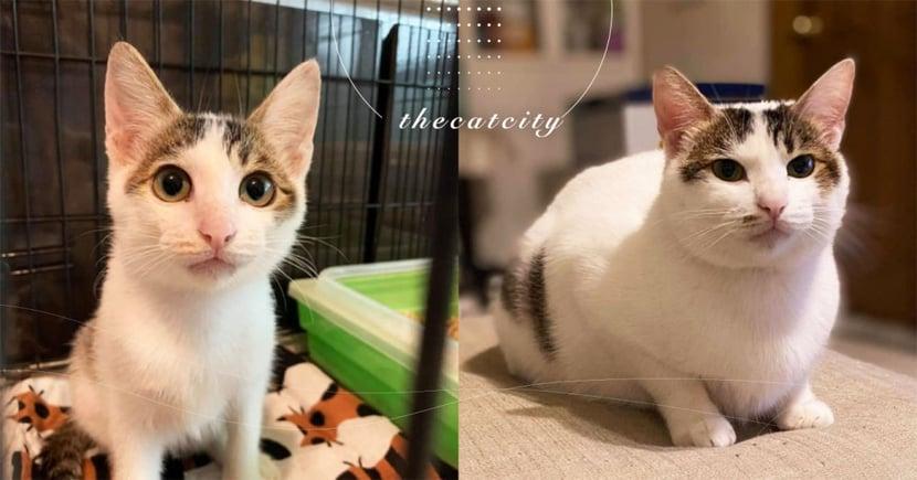 仙氣美貓領養一年後,飼主傳近照「判若兩喵」 送養人笑翻:這胖大叔誰?