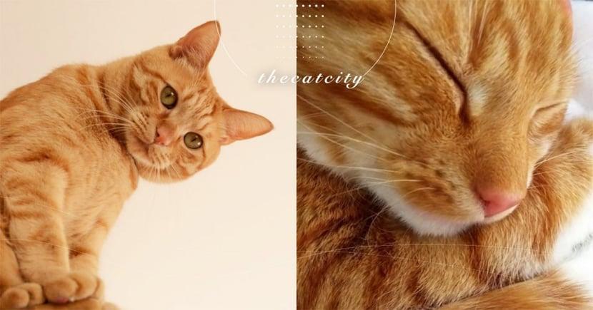 【貓最討厭的味道】5 種讓貓咪害怕逃跑的氣味,原來是一種自我保護機制!