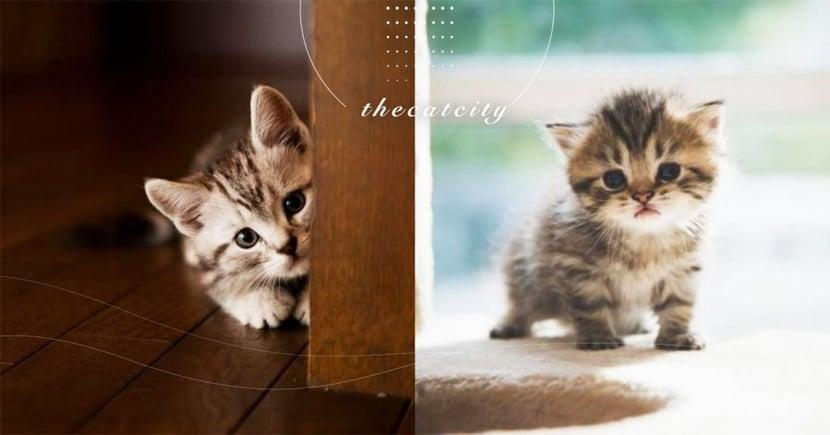 【新手貓奴】飼料、貓砂、外出籠怎麼挑?養貓新手常見 10 個問題總整理!