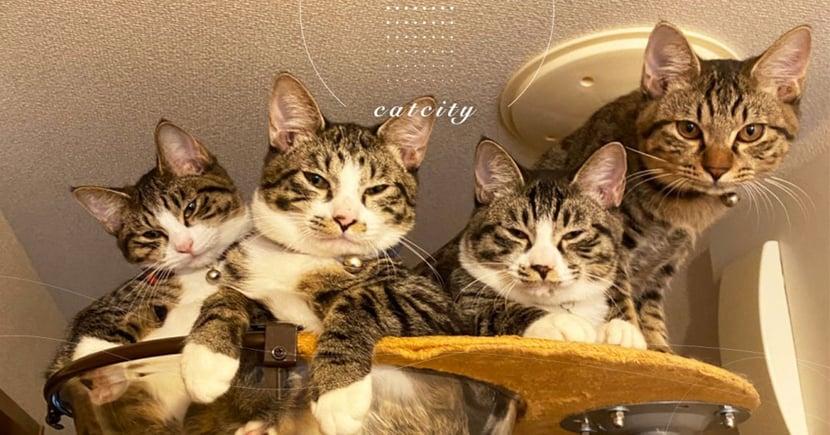 四貓擠爆貓台「眼神超犀利」,日本貓奴壓力倍增 網笑:罐罐交出來