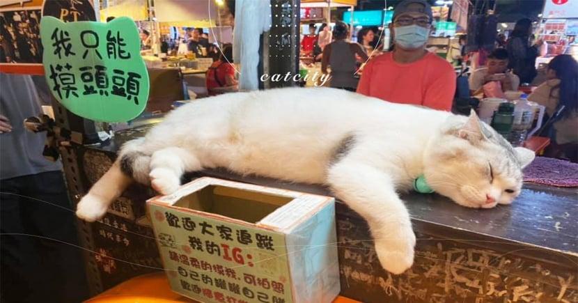 客人上門只顧睡!夜市拉茶店「工讀生」懶散態度讓粉絲瘋狂 網:真躺著賺