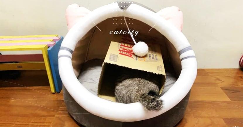 不睡就用拐的!奴才改造「貓窩樓中樓」主子秒入住 網笑翻:這也行?