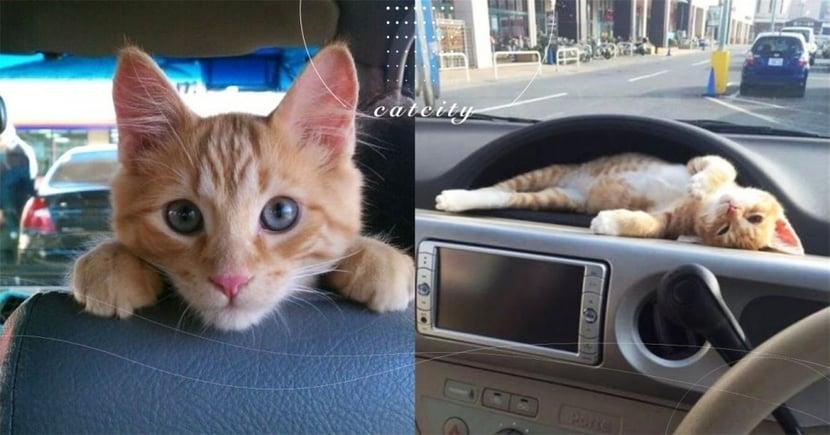 【車主注意】天冷躲貓貓要小心!開車多這做「4個動作」就能救貓一命!