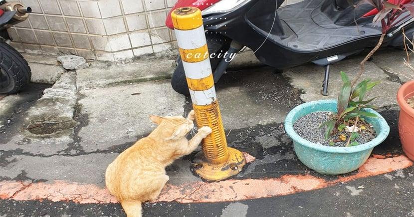 社區浪貓把「警示柱」當免錢磨爪用,網友笑爛:「貓抓柱無誤!」