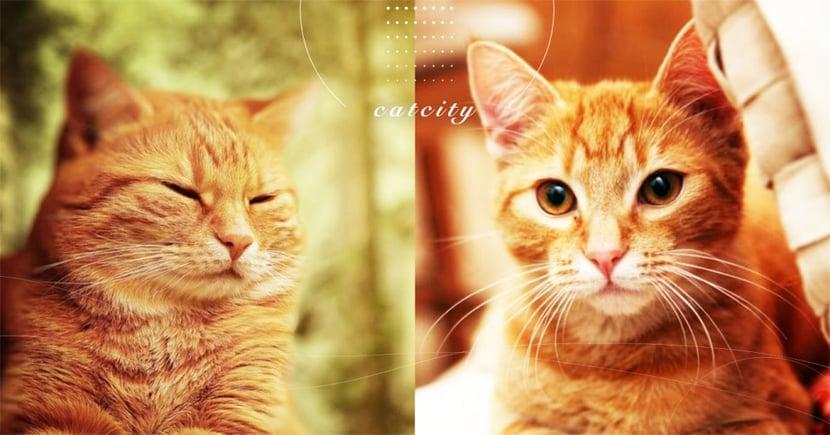 【貓咪保暖】怕貓冷到怎麼辦?冬天保暖五大招,貓奴必學攻略!