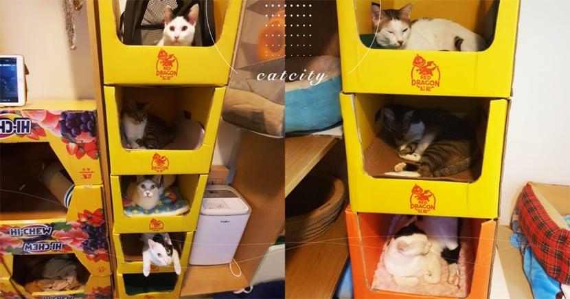 奴才撿紙箱自己搭, 5 層樓「豪華貓公寓」熱銷全滿 網:一貓一樓剛好!