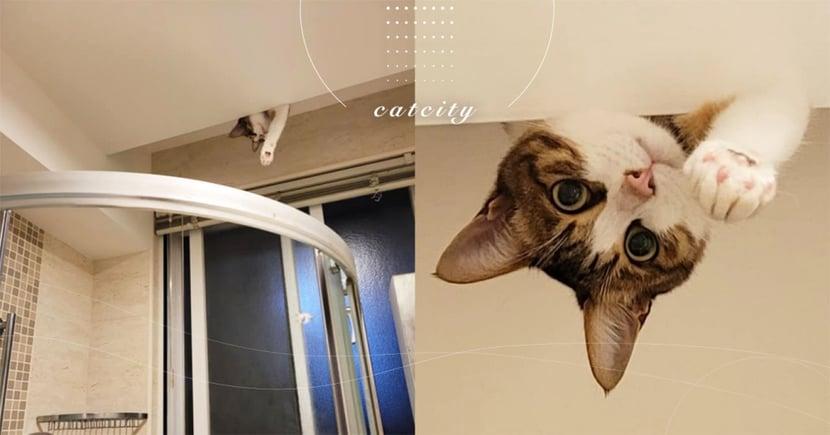 奴才洗澡感覺被監視,天花板驚見「偷窺貓」好奇直盯 網:超想當貓