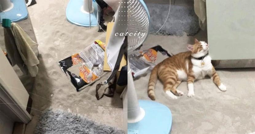 回家見「滿地貓砂」快氣炸,橘貓銷魂「趴沙灘」享受 網笑翻:比基貓
