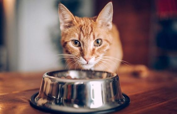 貓轉食,挑食貓,貓罐頭,生鮮食,乾糧