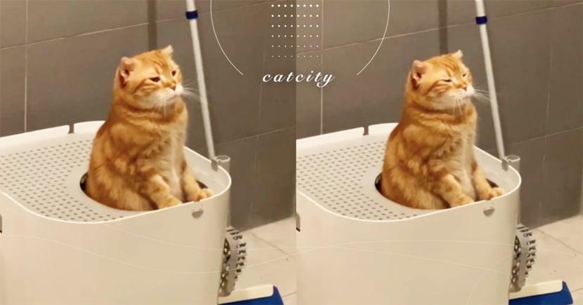 嘴邊肉集氣!橘貓「認真嗯便便」被偷拍,網笑:「嘟嘴出力好可愛」