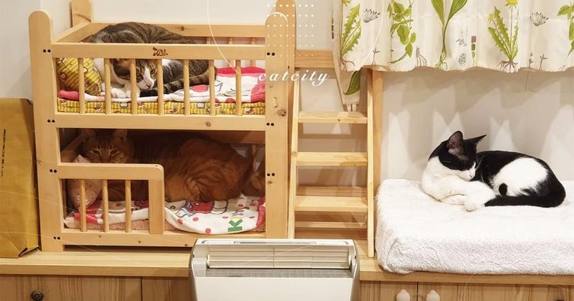 三貓分別霸佔上下鋪,超猛床位讓網友直呼:「這是男生宿舍!」