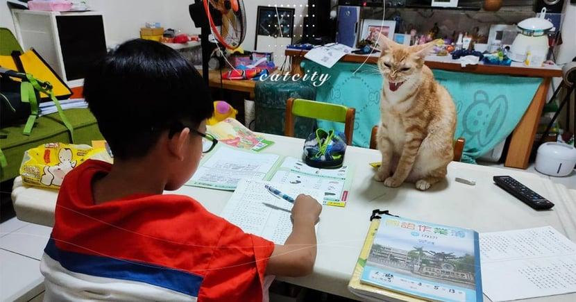 最凶喵助教!橘貓「嚴厲監督」小孩寫作業,網:給我認真一點!