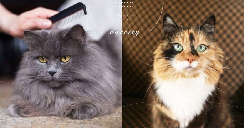 【貓咪毛色差】不能用人的洗髪精?影響「貓咪毛質」的六大因素,粗糙是有原因的!