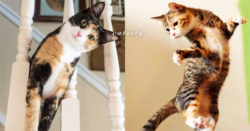【貓半夜暴衝】到了晚上特別嗨? 4 種有效改善「貓半夜暴衝」方法!
