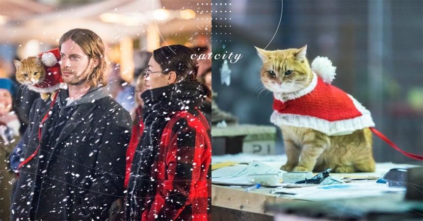 街貓BOB最後身影!2020 暖心電影《再見街貓BOB》聖誕前上映,逼哭粉絲:捨不得再見