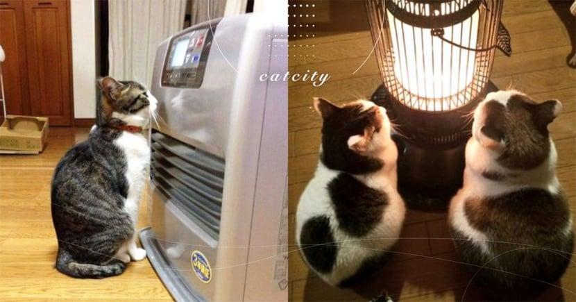 【貓保暖注意事項】開電暖器取暖?使用 3 點需注意,小心貓發生危險!