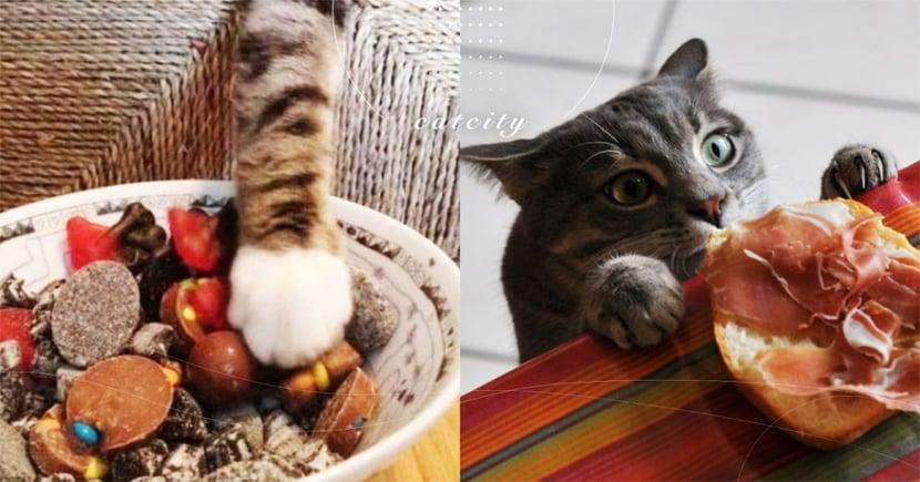 【貓可吃鹹嗎】貓偏愛重口味?吃鹹到底好不好?關於貓咪的三大冷知識!