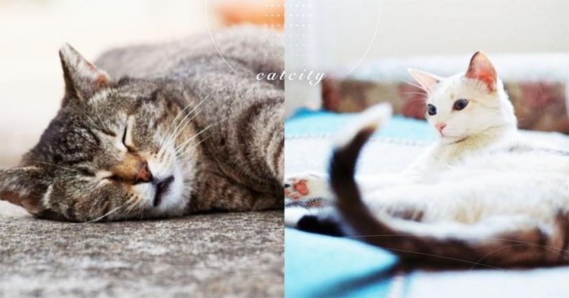 【貓老了有什麼症狀】怎知貓老了?從這三點判斷貓老化的症狀!