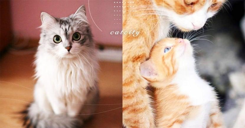 【新舊貓隔離】帶新貓回家注意事項!如何隔離、適應相處等一文總整理!