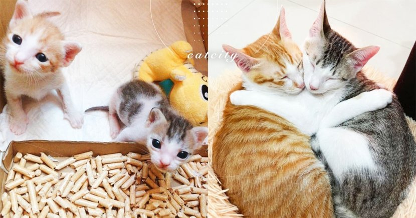 超萌前後對比!橘貓兄弟感情好到攬緊緊,網笑:像花生和芝麻麻糬