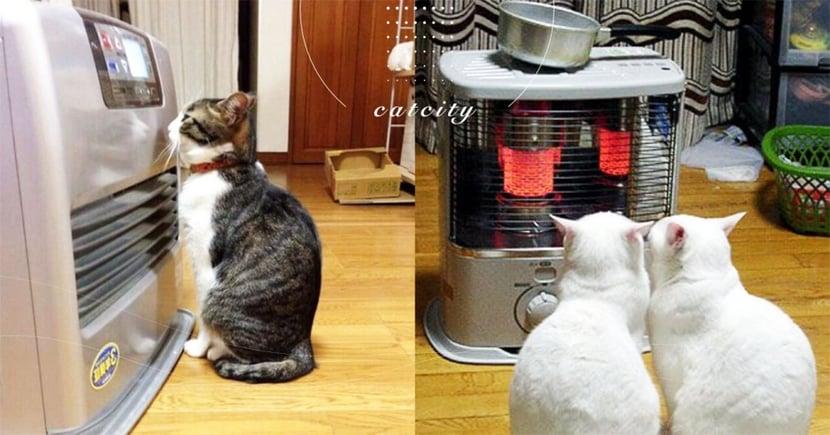 【寵物電暖器款式】鹵素、葉片、電毯怎選?網評推薦:養貓適用電暖器!