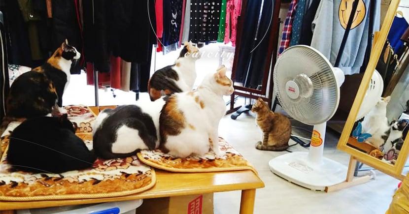 六隻店貓圍在「電暖扇」前等人開,神秘儀式讓網笑翻:「太陽教信徒」