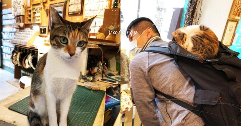 趴客人背不走!台南店貓「花花」愛找人當坐騎,網笑:「我也遇過」