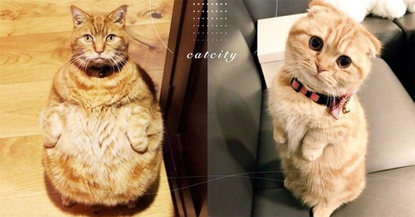 【貓適合戴項圈嗎】戴項圈該注意什麼?關於貓戴項圈的 3 種利弊!