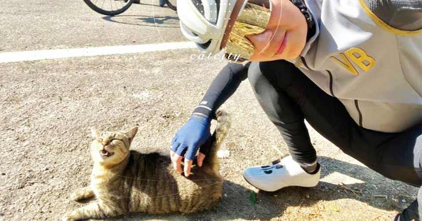 笑得好燦爛!腳踏車手幫按摩,虎斑貓露出「銷魂臉」 網笑:很懂摸