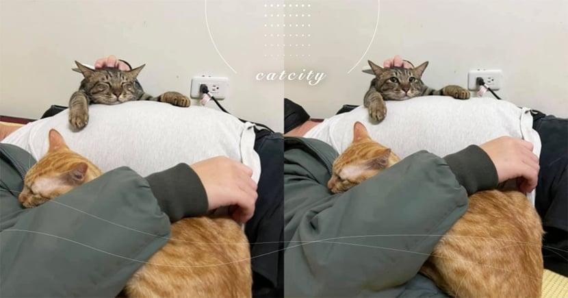 撒嬌討抱!虎斑貓躺肚肚趴睡,橘貓饋手臂享天倫 網:萌到抱緊!!