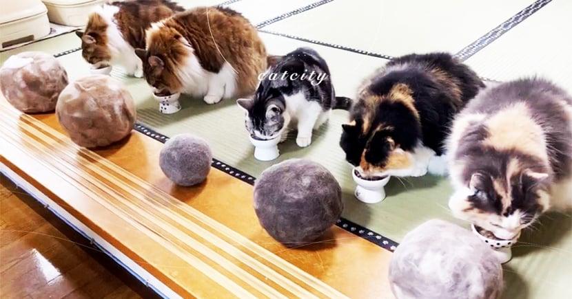 日本奴才幫忙收集廢毛,「一貓一球」排排隊 網笑翻:這是隕石吧